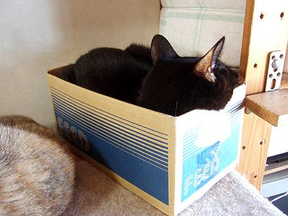 15×18×13の大きさの箱