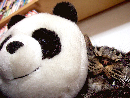 今日のパンダは、パンチラ_・)でなく主役級~