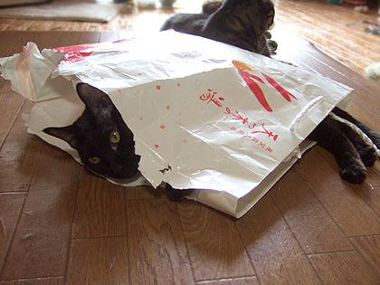紙袋でヤドカリ状態のバジル