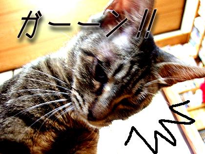 なづな、ショック~( llll゜Д゜)Σ