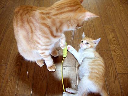 トー、猫パンチしちゃう?しちゃうの??