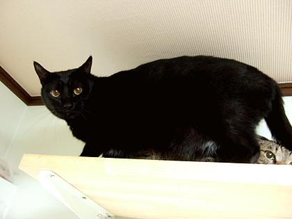黒猫さん、名前覚えてなくってごめんよ~