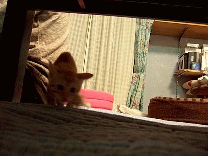 テーブルの下で私と遊んでいる最中の姿