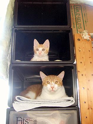 収納ケースの猫マンション