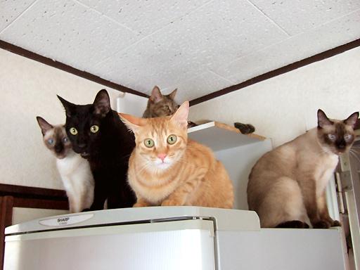 左から、もみじ、ソレル、トー、かえで、上はダヤン