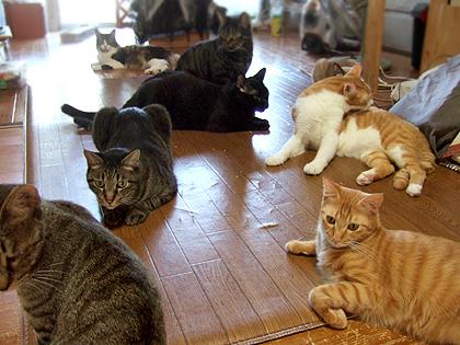 この写真に入りきらなかった猫も何人かいますょ_・)