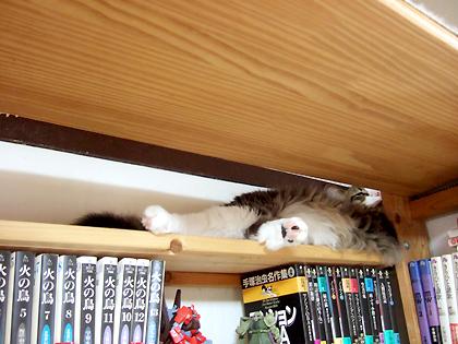ここの棚に置いてある漫画本は、手塚治虫ばっか