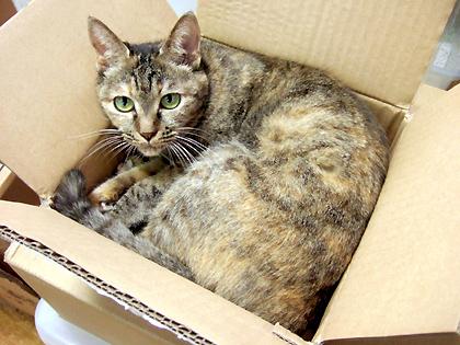 箱のサイズ、24×24×8cm