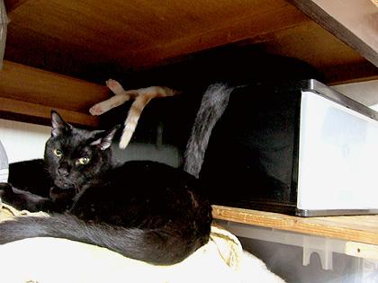 ソレルがいたら、黒猫勢ぞろいだったのにな、、惜しい!