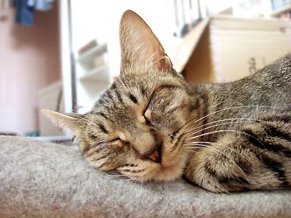 大きなお耳とかわいすぎる寝顔(* ̄ー ̄*)