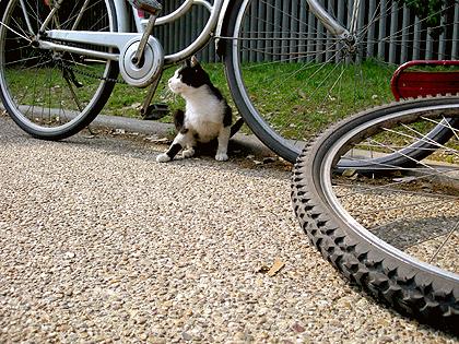 私達の自転車に寄って来た野良さん
