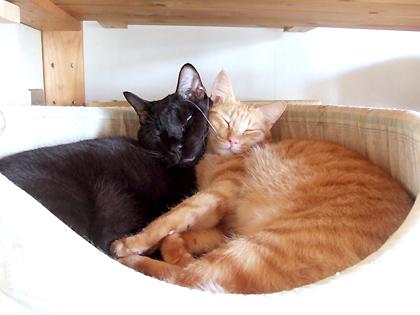 頬寄せ合って、ラブリーな2人の寝姿