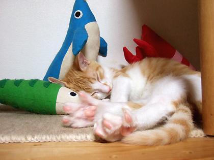 お魚キッカー、かわいくって3種類揃えちゃった(^▽^)♪