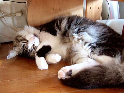 PC台の下でモッフモフ寝
