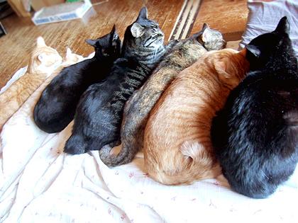 (右から)ちょび、トー、ダヤン、ねぎ、バジル、コニャ、ノル