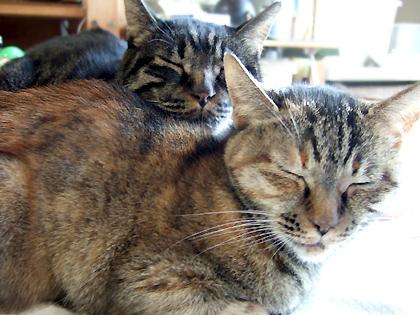 ねぎが仔猫の時、逢引している2人の姿もありました(*゜v゜*)