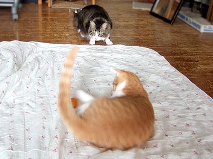 にぼちも参戦、ピン球強奪の瞬間を密かに狙ってます