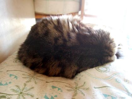 にぼちは、いつもどんな姿も「麗しい寝」