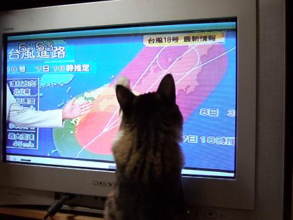 気になるのは台風情報?