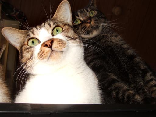 「えっ、私達おいて、お出かけしてくるの?」