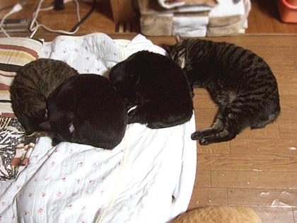 前から、ルナ、バジル、ちょび、ねぎ  手前の茶猫は、ノル