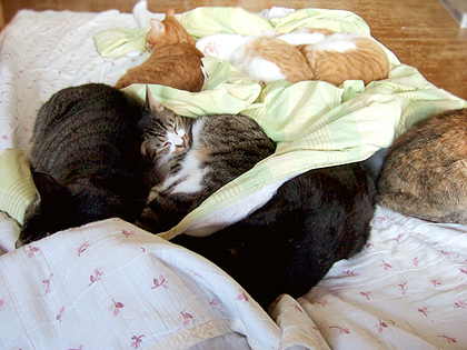 お昼寝メンバー、ちょび、、ダヤン(尻)、はち、蜜柑、茶虎隊、なづな(手前の盛り上がり部分)