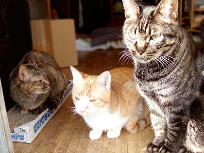(左から)ダヤン、コニャ、ねぎ
