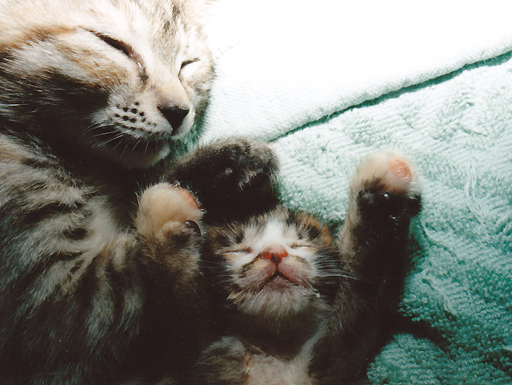 いつも仲良く寝ていた2人