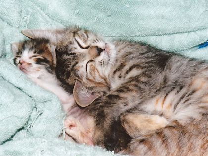 見てるだけで、目がとろけそうなほどに可愛すぎる寝顔♪