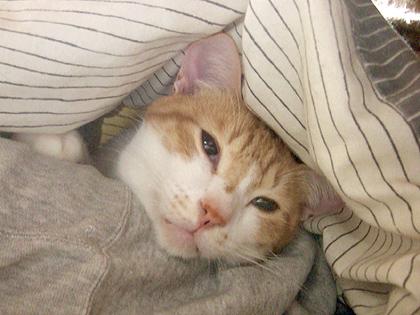 めっちゃ眠そう、、、だな(゜m゜*)