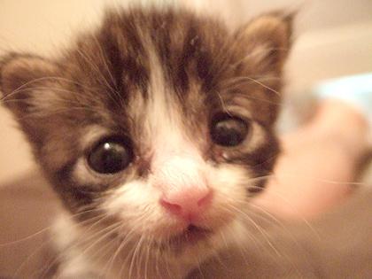 『つっぱしる猫』も、にぼちから初まった~