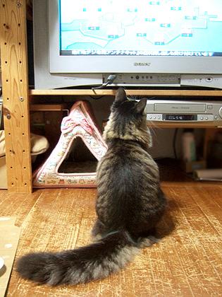 TVはもっと離れて見ましょうね(≧m≦)