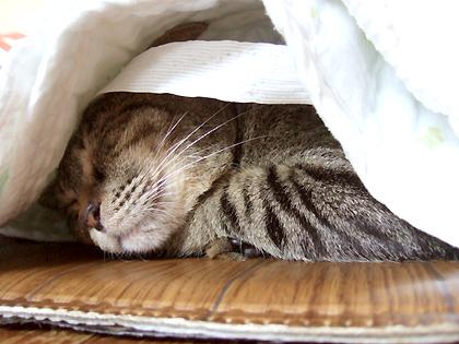 なづなは潜り寝が大好きです( ̄m ̄〃)