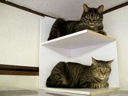 こちらも『つっぱしる猫』その55からのワンシーン