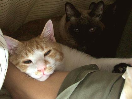 腕枕のコニャ、奥はかえでとバジル、、、その奥は写ってませんがもみじも居るんです