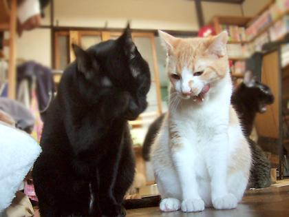 コニャの後ろに居る黒猫さんは、ごち顔のバジル
