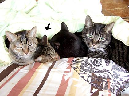 (左から)ダヤン、ルナ、ちょび、ねぎ