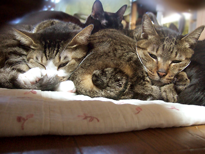 「G」の猫文字の時のルナと蜜柑の寝顔