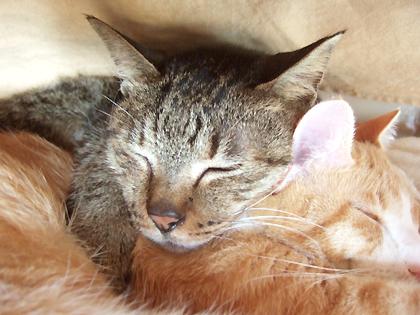 コニャ枕は居心地良いね♪