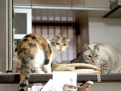 夕ご飯中の2人、、鈴ちゃんはまだまだ警戒中