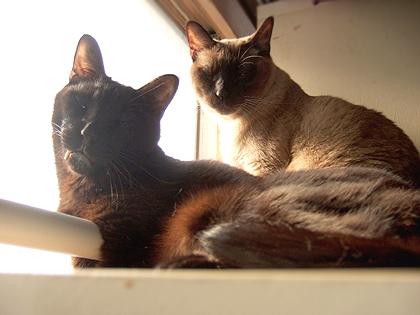 今日撮った(左から)ソレル、かえでの2人