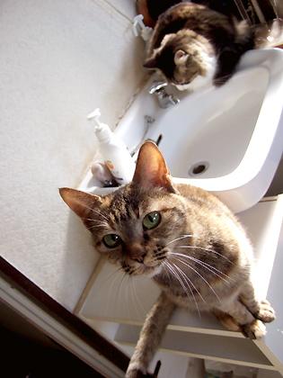 洗面台の両端で見張り番が二人