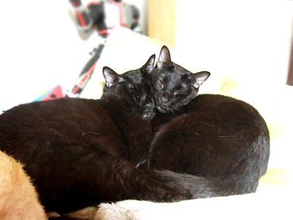 くま、バジル親子二人の微笑ましい寝姿