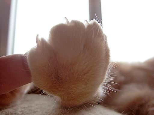 にゃんこのお手手と私の指