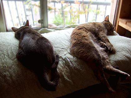 窓際で寝ている、なづな、ダヤン