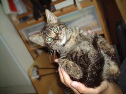 お耳が大きすぎる、ねぎの仔猫時代