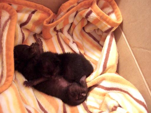 下が大きな子、上で寝そべっているのが小さい子