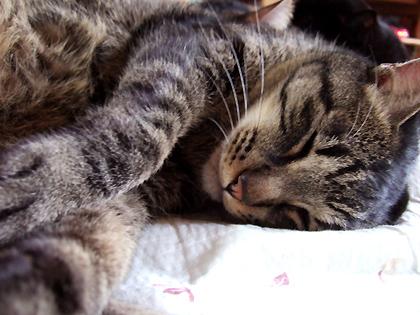 かわいい寝顔に、出迎えなしでも許してしまうんですよね~