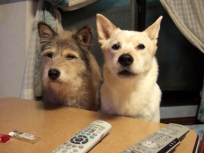 卓上にあるご馳走スナイパーの番犬さん
