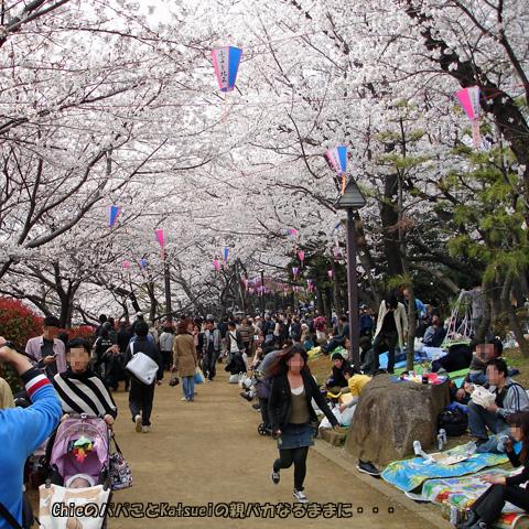 さくらSA*KASO祭り